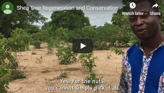 Shea Tree Regeneration and Conservation