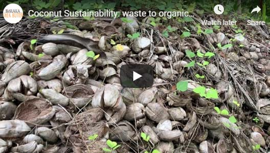 Coconut Sustainability: waste to organic planting pots