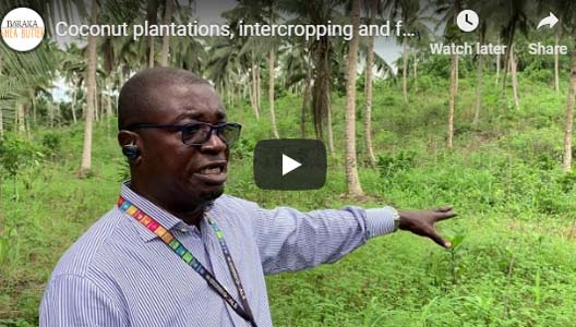 Coconut plantations, inter-cropping and food security