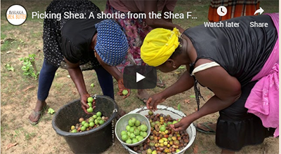 Picking Shea: A shortie from the Shea Forest