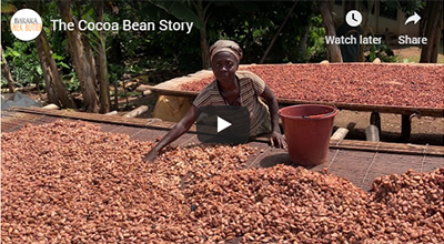 The Cocoa Bean Story