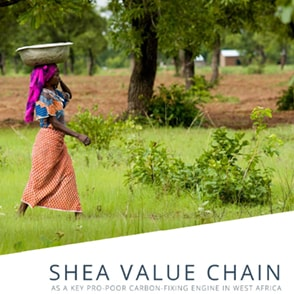 Shea Forests Efficiently Sequester Carbon